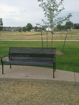 Tierney K-Bench & Tree.jpg