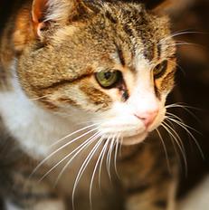 Cat Sitting Philadelphia
