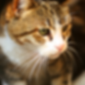 Carrollwood Cat Sitter