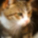 katten oppas amsterdam kattenoppas