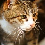 Stephanie- Animal Care Assistant