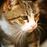Katze Minka und Karin: Ein Streit mit schlimmen Folgen