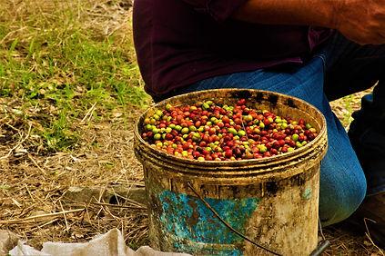 A bucket of coffee.jpg