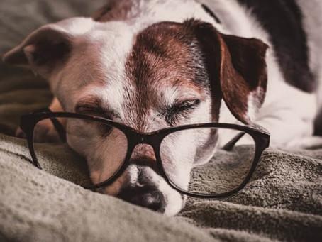 Keep Your Senior Pets Healthy This November