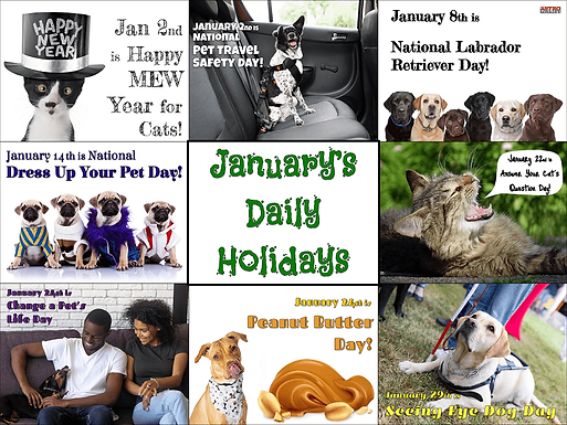 Promotion Calendar & Marketing Materials | January's Daily Holidays