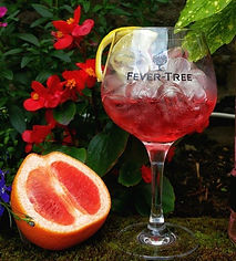 Fever Tree Gin