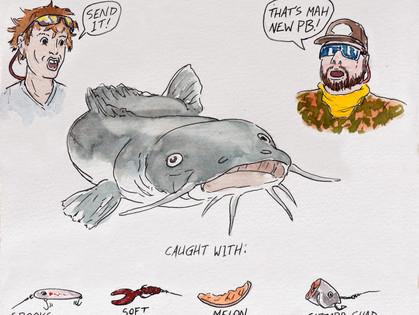 The Flathead Catfish