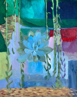 Succulent Flower Canopy