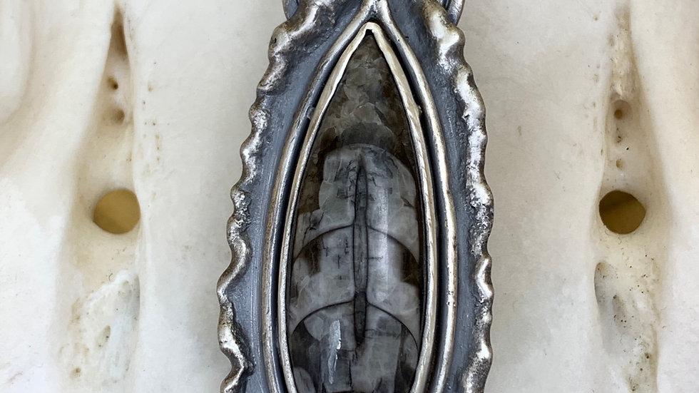 MELTED EDGE ORTHOCERAS