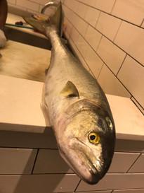 jaffa foodie fish
