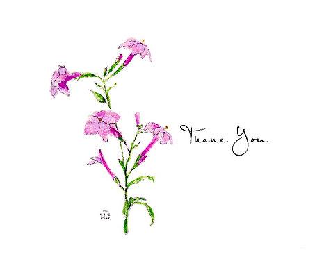 Nicotiania - Thank You