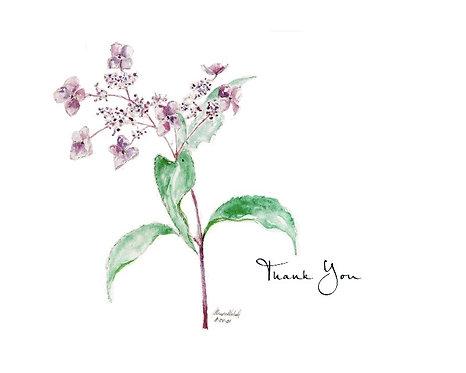 Lace Hydrangea - Thank You