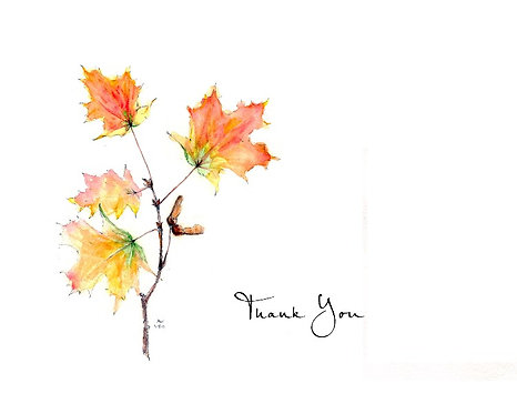 Maple - Thank You