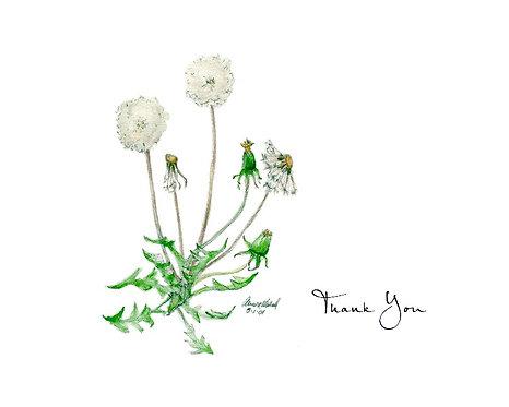 Dandelion - Thank You