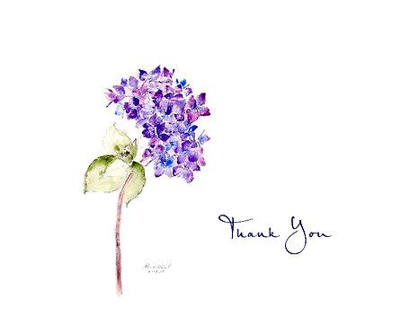 Hydrangea - Thank You