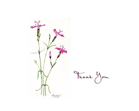 Dianthus - Thank You