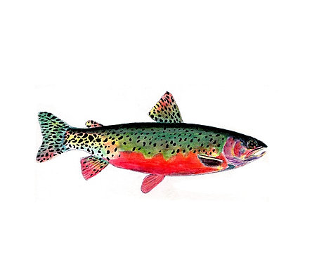 Trout - Green