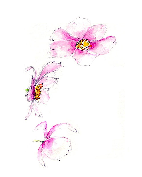 Wild Anemone