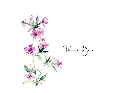 Saponaria - Thank You