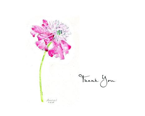 Peony - Thank You