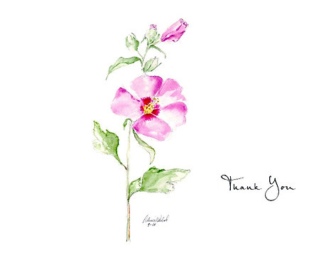 Rose of Sharon - Thank You