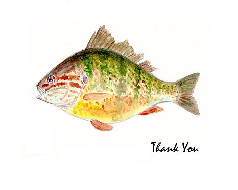 Pumpkinseed - Thank You