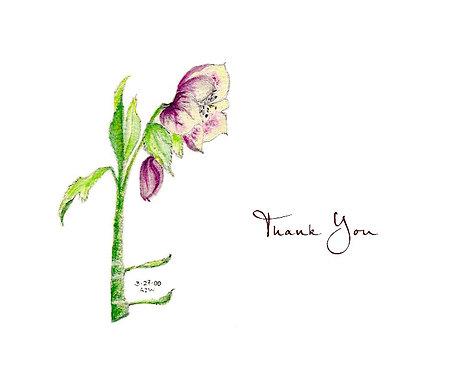 Lenton Rose - Thank You