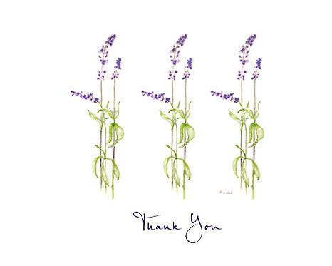 Salvia - Thank You