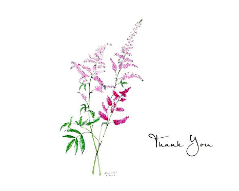 Astilbe - Thank You
