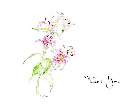Stargazer Lily - Thank You
