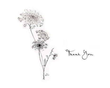 Queen Anne's Lace - Thank You