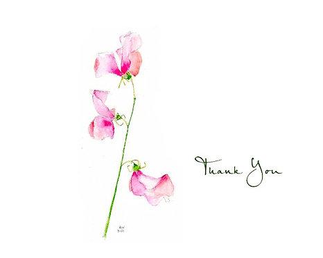 Sweet Pea - Thank You
