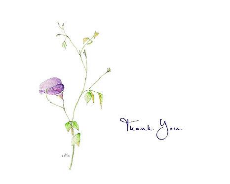 Purple Pea - Thank You
