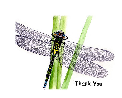 John's Dragonfly - Thank You