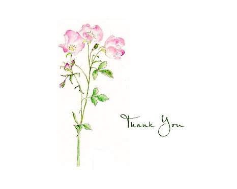 Wild Rose - Thank You