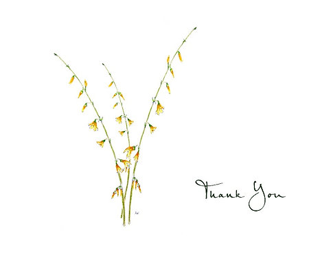 Forsythia - Thank You