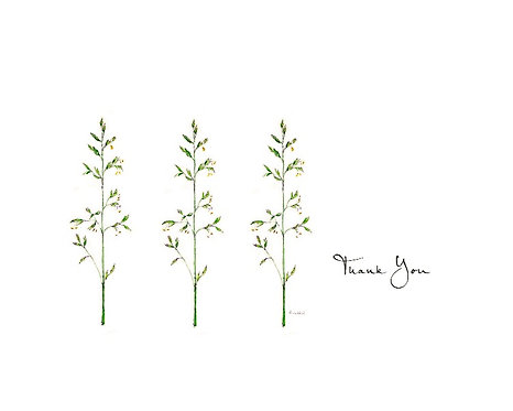 Wayside Grass - Thank You