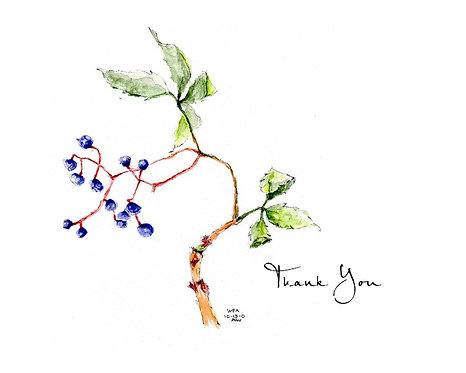 Boston Ivy - Thank You