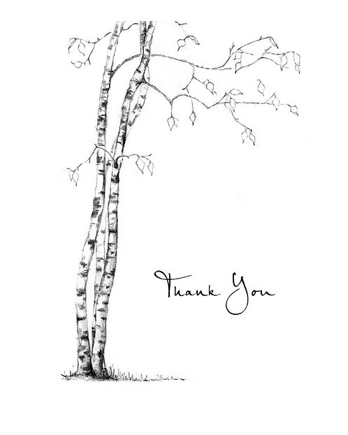 Birch Tree - Thank You