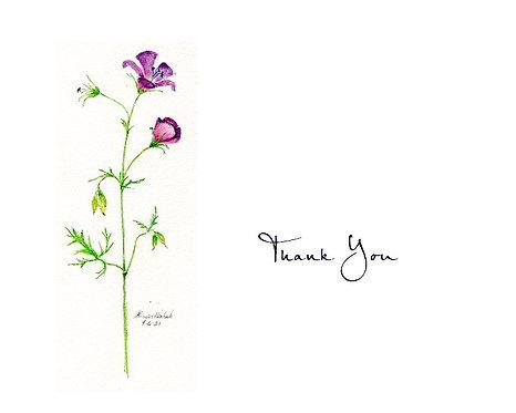 Geranium - Thank You