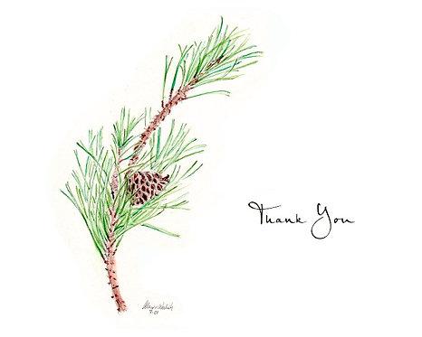 Pine Branch - Thank You