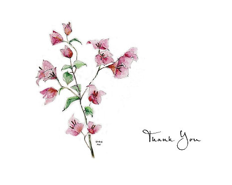 Bougainvillea - Thank You