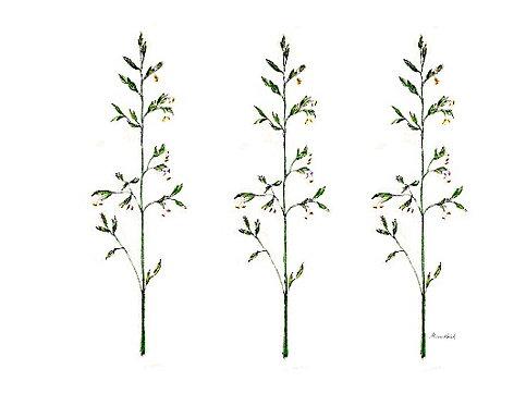 Wayside Grass