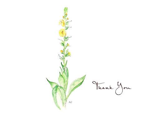 Digitalis - Thank You