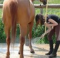 soins cheval.jpg