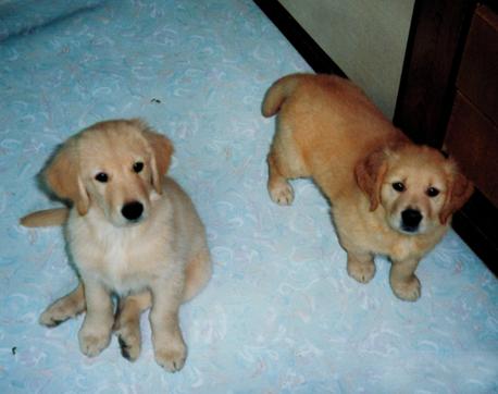 Young Simba & Chaka 1.png