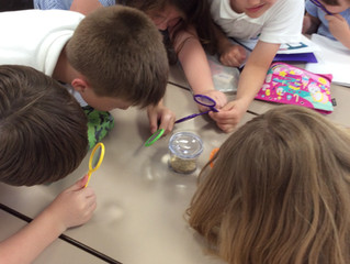 Science Investigation -Sensational Seeds!