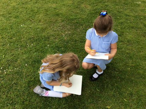 Observational Drawings of our Environment - Sycamore