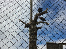 Year Two Trip to Knowsley Safari Park-Sycamore