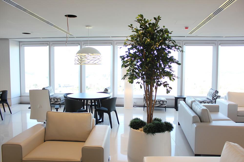 Artificial Ficus Tree with Mondo Grass
